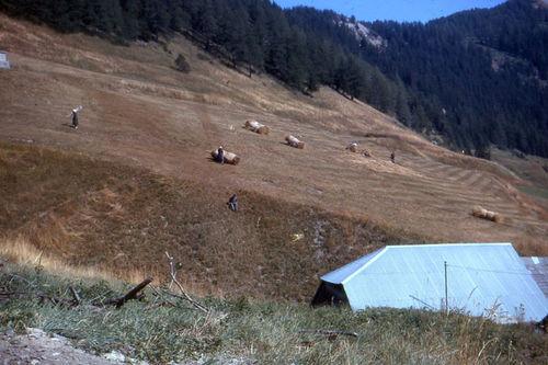 Les trousses de foin au dessus du village 1964